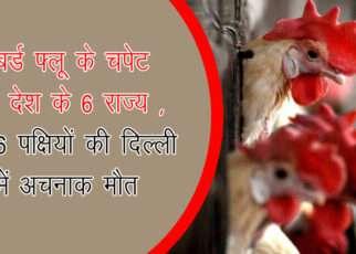 बर्ड फ्लू के चपेट में देश के 6 राज्य , 16 पक्षियों की दिल्ली में अचनाक मौत  