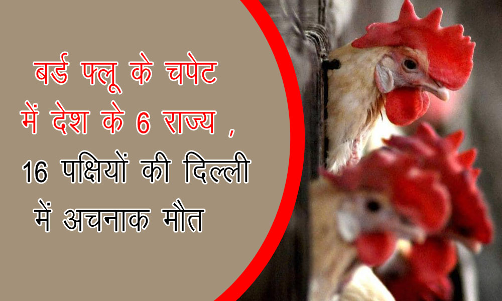 बर्ड फ्लू के चपेट में देश के 6 राज्य , 16 पक्षियों की दिल्ली में अचनाक मौत |